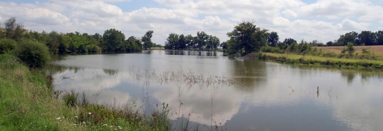 Entre faune, flore et vigne, découvrez le site des étangs de la Morinière !