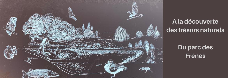 Image à la une du : A la découverte des trésors naturels du Parc des Frênes à Montévrain