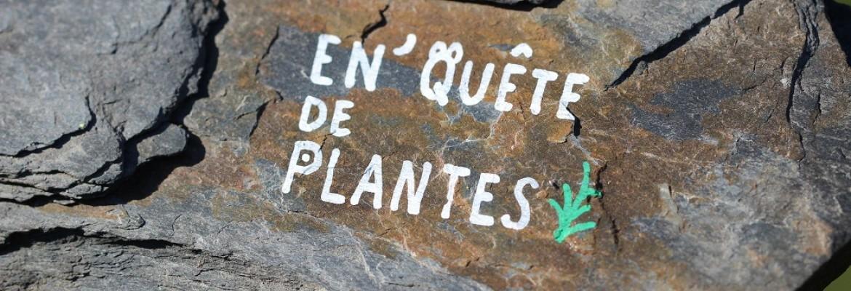Image à la une du : En'Quête de plantes au Parc des Garennes - Sur l'ardoise, des plantes et des humains à Les Garennes sur Loire