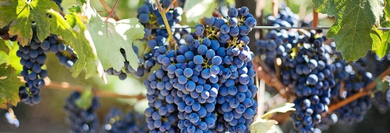 Le carnet du vigneron - Domaine de Bablut