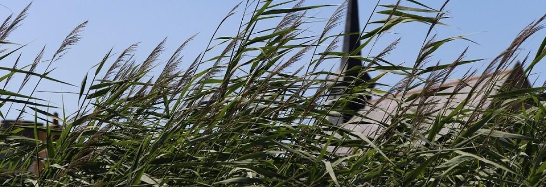 En'Quête de plantes au port de Lavau - Mais où est passée la Loire ?