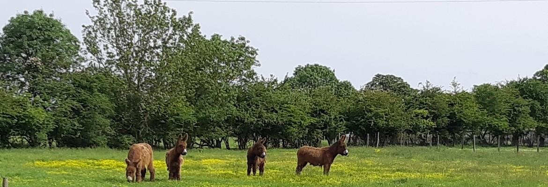 TRIAIZE, Le Pays des ânes ?
