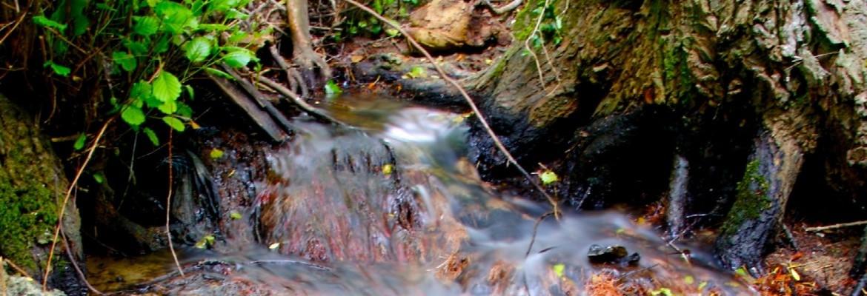Bussy-Saint-Georges au fil de l'eau