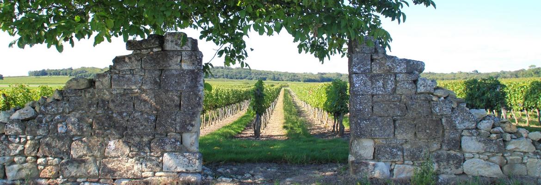 Les enquêtes dans le vignoble