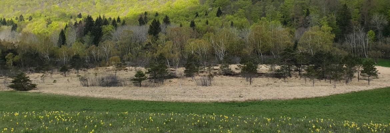 La nature des tourbières du Peuil