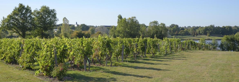 Image à la une du : Revivez le passé viticole de cette jolie cité de caractère ! à Saint-Denis-d'Anjou