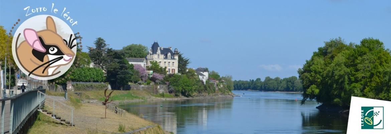 Image à la une du : Zorro découvre la nature en ville à Chalonnes-sur-Loire