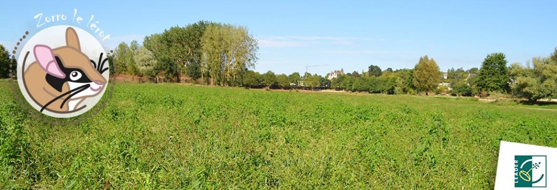 Image à la une du : Zorro redécouvre le Layon à Chalonnes-sur-Loire